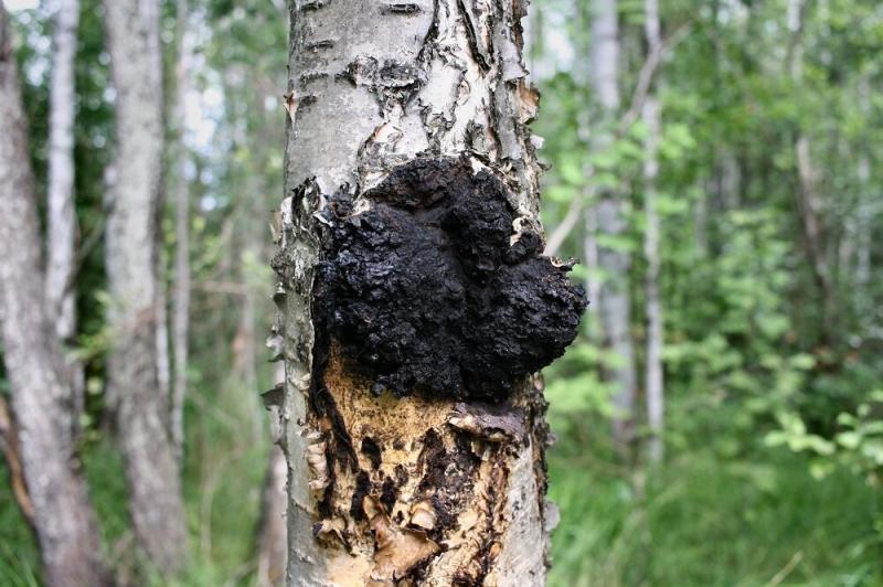 В лес за косметикой