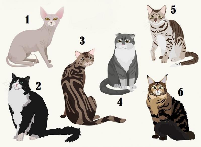 Выберите кошку на изображении и узнайте некоторые особенности вашего характера