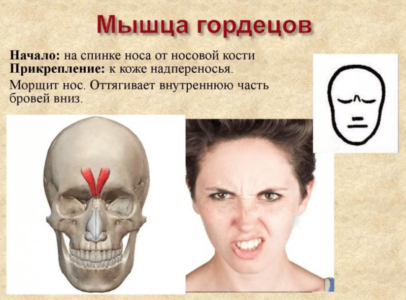 Морщины? В психосоматике причины. Как старение лица связано с работой органов и эмоциями