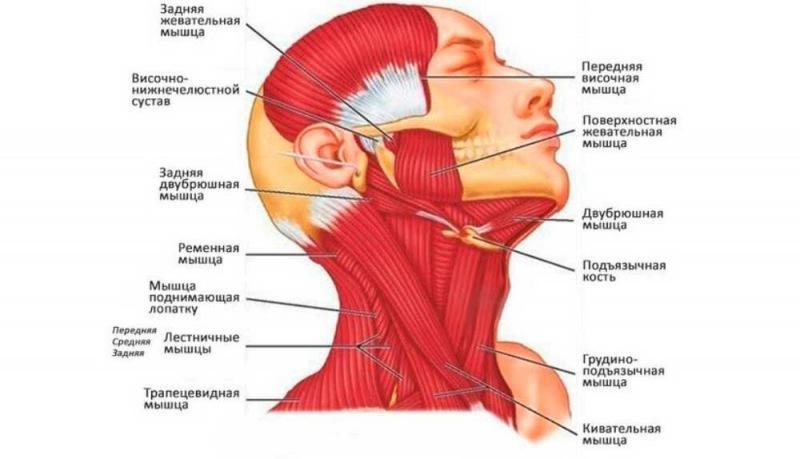 Совет от косметолога: «Не забывайте про кожу под нижней челюстью, она ваше лицо на себе держит»